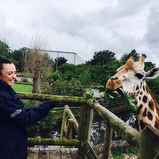 Had so much fun feeding this beautiful giant #giraffe #chesterzoo #animals #blogger #pictureoftheday #awesomeexperience #virginexperiencedays